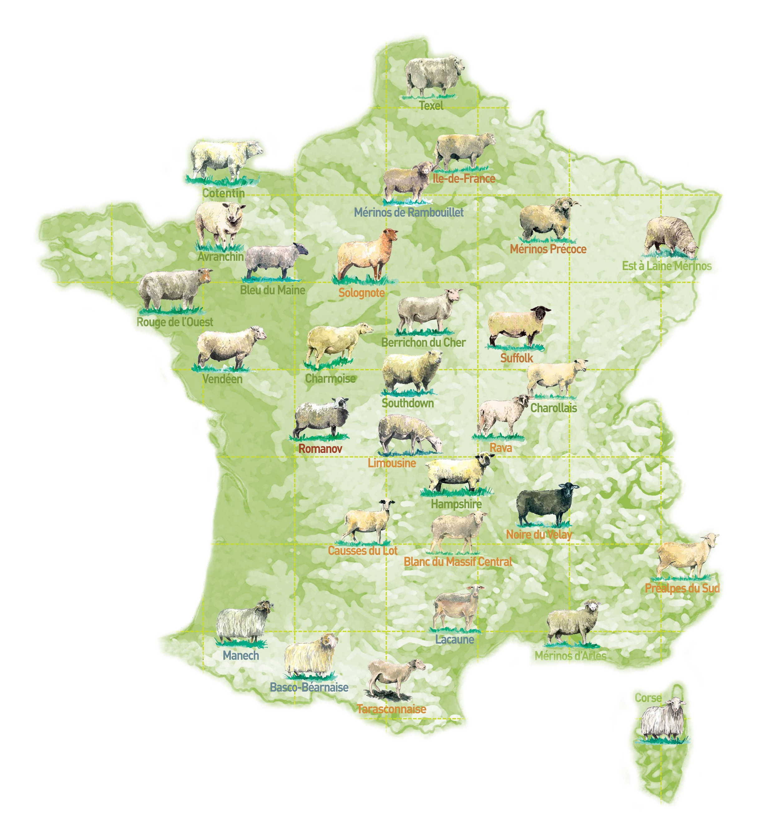 Carte des races ovines en France
